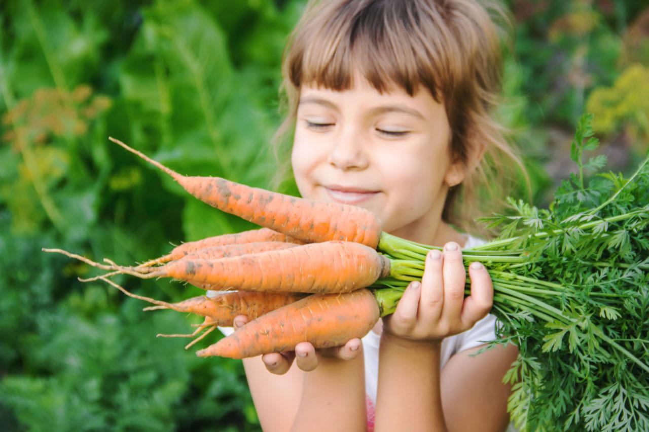 Dziewczynka ze świeżo zebranymi marchewkami